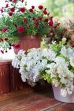 Petunias in pots on   balcony. Stock Image