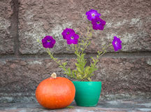 Petunias and pumpkin Royalty Free Stock Images