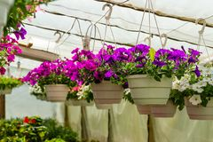 Different flowers in the greenhouse Stock Image
