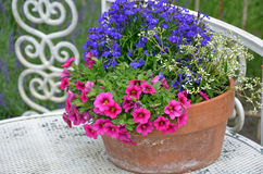 Petunias and violets flowerpot Royalty Free Stock Photography