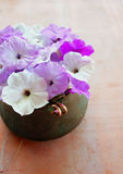 Petunias and wedding rings Stock Photography