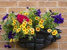 Petunias y geranio en cesta de la pared imágenes de archivo libres de regalías