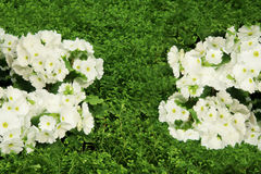 Petunias, Yellow daffodil,pansies, snapdragon and marigold, beautiful flower green grass background black white Stock Photography
