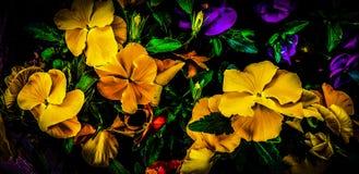 """Petunie †""""everyone' s-Liebling, hell-blühende Zierpflanze lizenzfreie stockfotografie"""