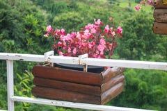 Petunie blüht in hängendem Blumen-Topf auf Metallzaun stockbild