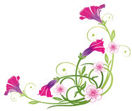 Petunie, fiori di estate Immagini Stock