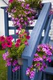 Petunie sul portico blu Fotografia Stock Libera da Diritti