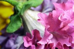 Petunien-Blume Stockfoto