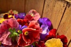 Petunienblumenblätter Lizenzfreies Stockbild