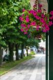 Petunior i blomkrukan som hänger bredvid promenad arkivfoto