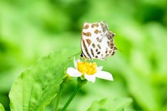 Peu butterly sur la fleur blanche photo stock