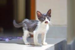 Peu chaton avec une moustache comme la marche d'Hitler photo libre de droits