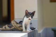 Peu chaton drôle avec une moustache comme Hitler photo libre de droits