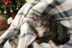 Peu chaton gris dans une maison molle photos stock