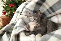 Peu chaton gris dans une maison molle image stock