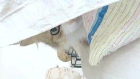 Peu chaton se cachant sous le plastique blanc banque de vidéos