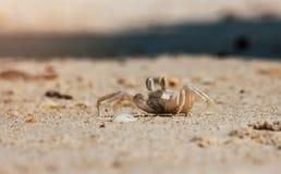 Peu craby Image libre de droits