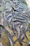 Peu crocodiles dans l'eau photo stock