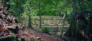 Peu d'étude des structures archéologiques dans la jungle dans l'a Photos stock