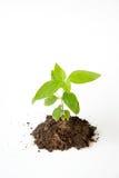 Peu d'arbre avec l'élevage de sol Images libres de droits