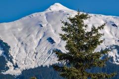 Peu d'arbre, grande montagne Images libres de droits