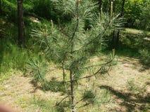 Peu d'arbre Stationnement Jour ensoleill? Ressort Beau temps de ressort photos stock