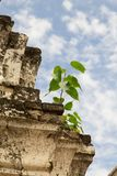 Peu d'arbre vert de bodhi grandissant sur la vieille pagoda sous le bl photographie stock