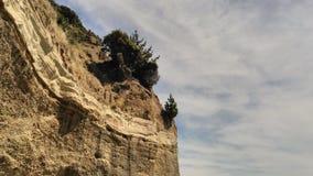 Peu d'arbres et de mauvaise herbe sèche sur une falaise Photos libres de droits