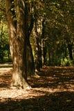 Peu d'arbres minces Images stock