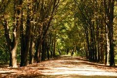 Peu d'arbres minces Images libres de droits