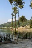 Peu d'arbres par le lac de bovansko photos stock