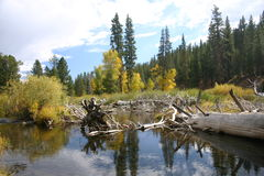 Peu d'automne de fleuve de Truckee Photographie stock libre de droits
