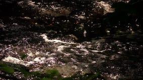 Peu d'eau de crique en nature banque de vidéos