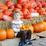 Peu d'enfant s'asseyant avec un bon nombre de potirons sur la ferme de correction Image stock