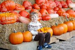 Peu d'enfant s'asseyant avec un bon nombre de potirons sur la ferme de correction Photo stock
