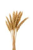 Peu d'oreilles de blé Photographie stock