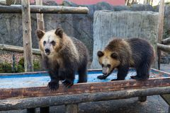 Peu d'ours au zoo Images stock