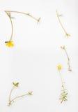 Peu d'usine avec les fleurs jaunes Photo libre de droits