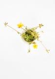 Peu d'usine avec les fleurs jaunes image libre de droits