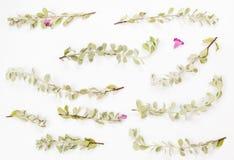Peu d'usine avec les fleurs violettes photographie stock libre de droits