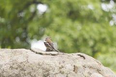 Peu de birdie sur un arbre photo libre de droits