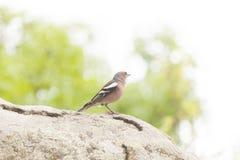 Peu de birdie sur un arbre image libre de droits