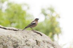 Peu de birdie sur un arbre photographie stock libre de droits