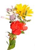 Peu de bouquet Image stock
