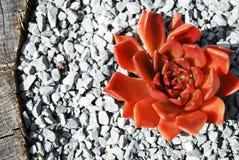 Peu de cactus images libres de droits