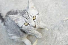 Peu de cat& x27 ; yeux de s, foyer sélectif Photographie stock libre de droits