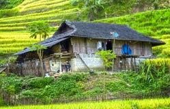 Peu de Chambre sur la prairie Vietnam du nord-ouest images stock