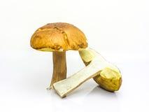 Peu de champignon brun de boletus coupé en tranches Image libre de droits