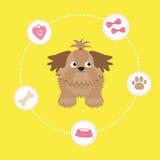 Peu de charme substance bronzage de Shih Tzu et de chien dash Image libre de droits