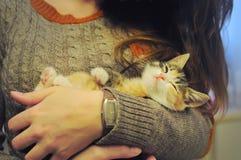Peu de chat de callico dans les bras d'une fille Photographie stock